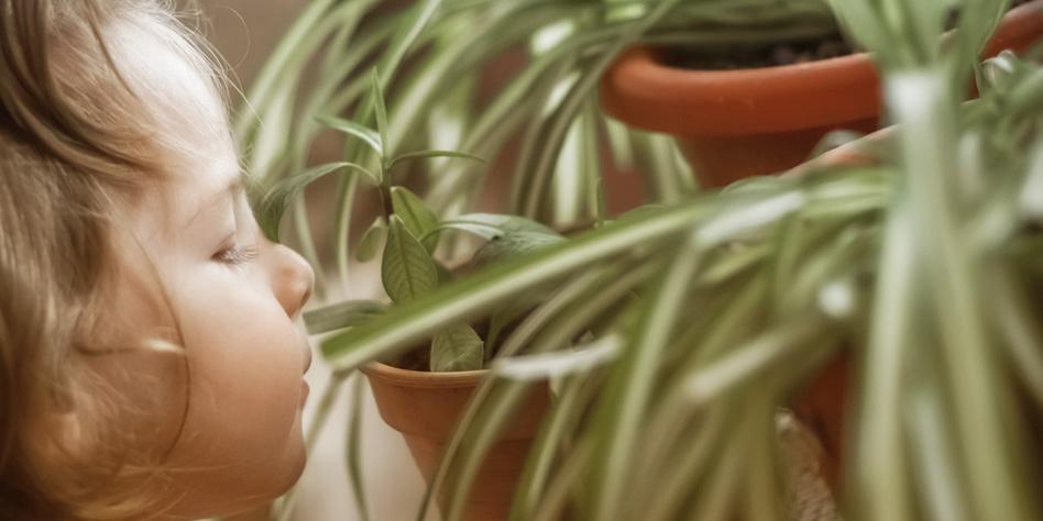 Con estas plantas purificarás el aire de tu casa