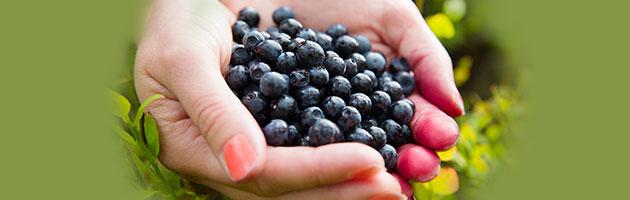 Protegido: ¿Cómo puedo obtener todo el poder antioxidante del Maqui?