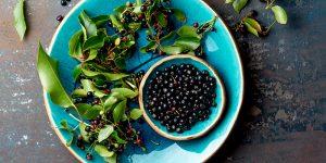 Maqui Antioxidantes