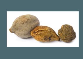 Fruta Triphal