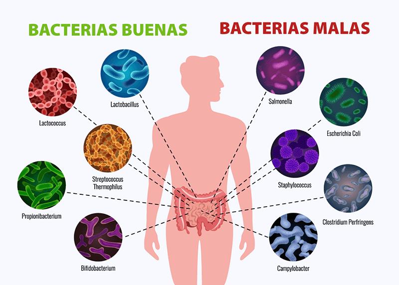 bacterias buenas y malas