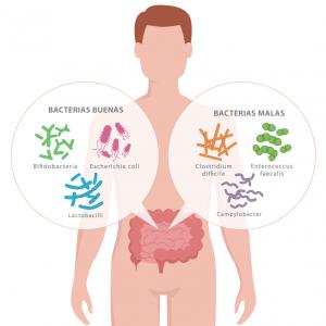 Bacterias buenas y bacterias malas